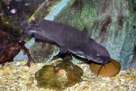 2013-11-20-channel-catfish