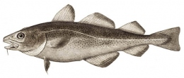 2013-12-6-cod