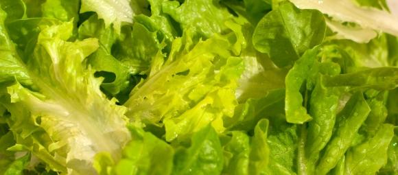 2014-5-15-lettuce