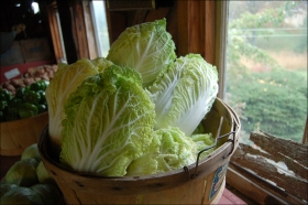 2014-6-29-napa-cabbage