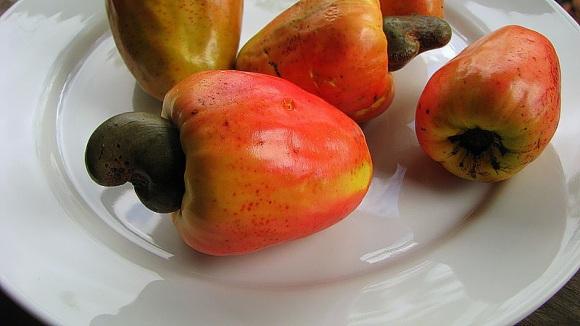 2104-6-27-cashew-apple