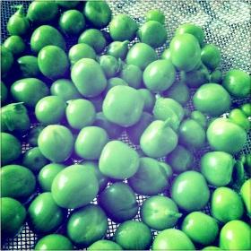 2013-11-21-peas-1