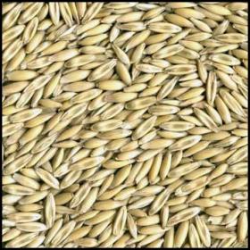2014-1-12-whole-oats