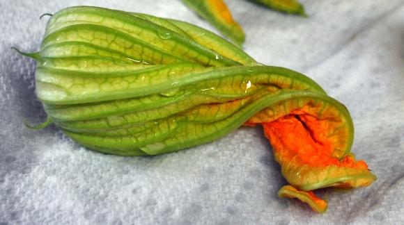 zucchiniblossoms-solo
